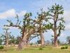 senegal-baobabs