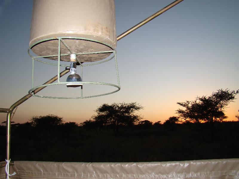 Tanzania, P.N. Serengueti