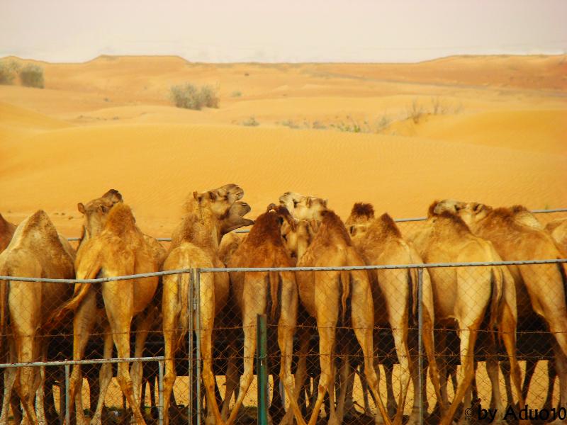 Emiratos Árabes, Desierto de Dubai